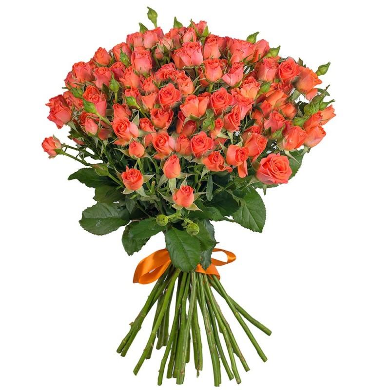 Кустовая роза Amelie